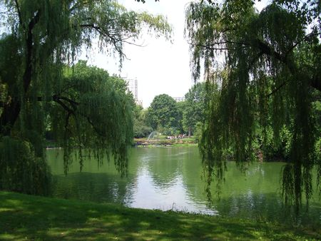 Weeping willow reflected in Central Park lake (NYC) Stock Photo - 7966824