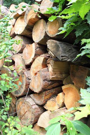 Closeup view of a pile of firewood photo