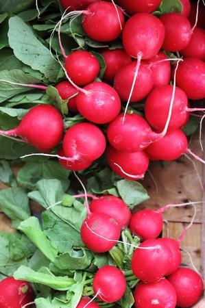 sold small: Ravanelli freschi in vendita in un fruttivendolo