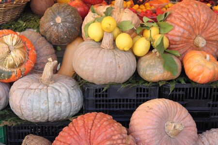 Pumpkins for sale in a greengrocery photo