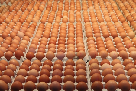Many brown eggs in carton tray Stock Photo