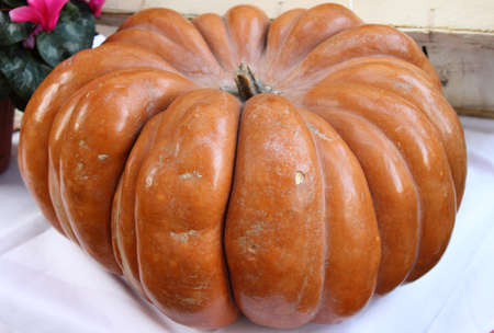 greengrocery: Pumpkin for sale in a greengrocery
