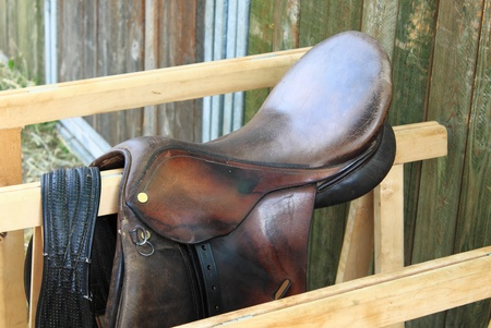 girth: Saddle horse in brown leather