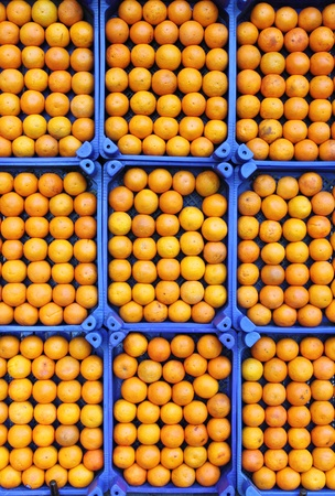 Oranges in rows for sale in a greengrocery photo
