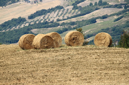 bales: Hay bales in the countryside