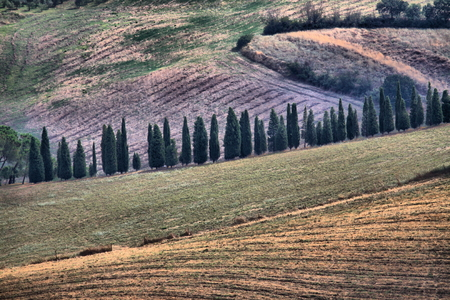 Landscape in Tuscany with cipress - HDR 免版税图像