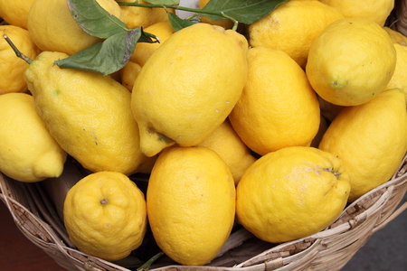 Traditional lemons in Amalfi Coast, Italy