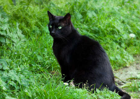 catlike: Black cat with green eyes