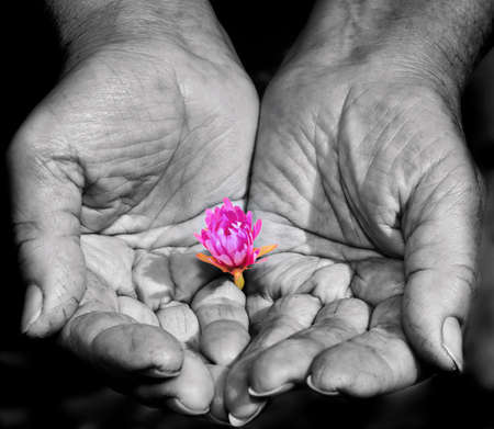 womna: Strong womna s hands holding a little flower