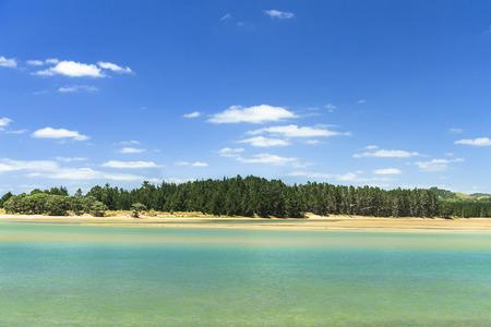 new zealand beach: Beautiful sea landscape in New Zealand, Blue sky, green sea and wood