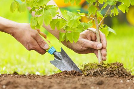 responsabilidad: Manos Plantar pequeño árbol con raíces en un jardín sobre fondo verde
