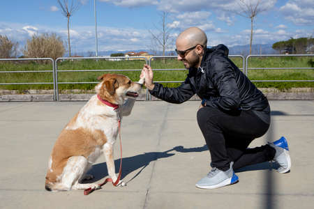 White and brown dog gives five to his owner. Dog gives five to caucasian smiling guy. friendship concept between man and dog. Dog training. Close up shot