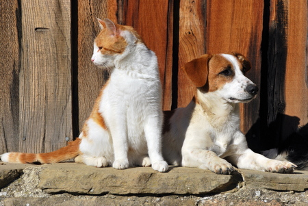 Cat and Dog together Stockfoto