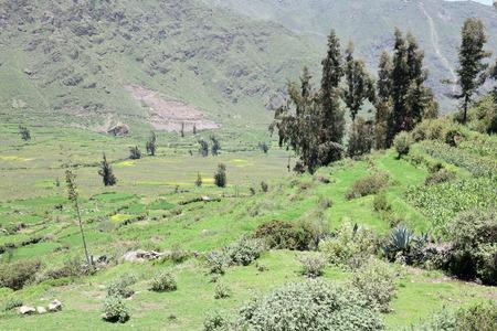 Scenery  near Cabanaconde a little village in the Colca canyon, Aequipa region, Peru Stock Photo