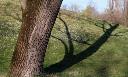 tree close-up with shadow and green grass at the park in a sunny day - concept and metaphor psychology nature