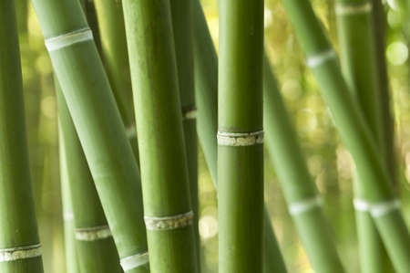 Closeup of a green bamboo forest  Stock Photo - 18191146