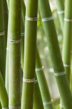 Closeup of a green bamboo forest Stock Photo - 18191133