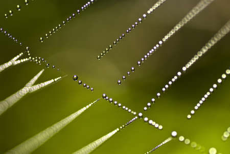 Dew drops on spider web photo