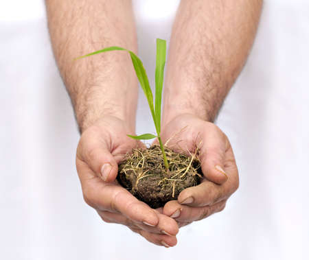 Hands offering a turf of earth with a young plant