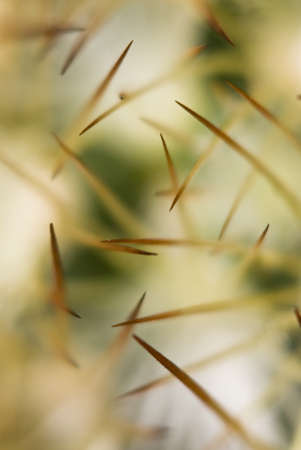 thorn tip: Thorn tips of succulent palnt