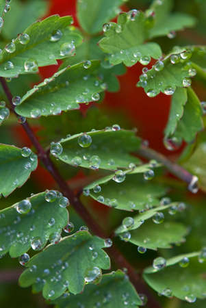 Dew drops on edges of leaves Stock Photo - 18334485