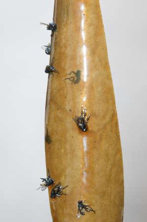 Hanging flypaper with dead flies on it