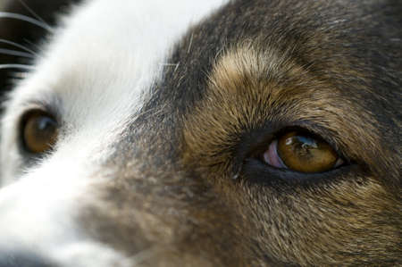 Close-up of the eyes of an abandoned dog photo