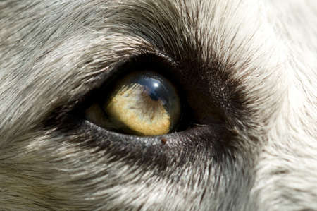 Close-up of an eye of an abandoned dog photo