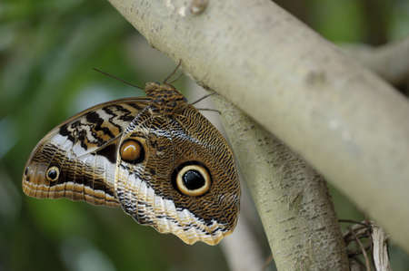 Tropical butterfly perched on a tree trunk