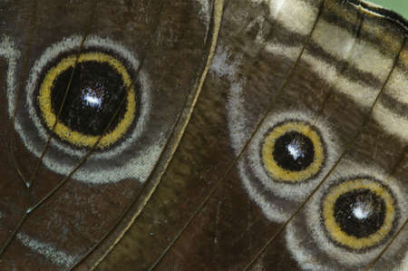 mimetism: Detail of eye spots on a tropical butterfly wings Stock Photo