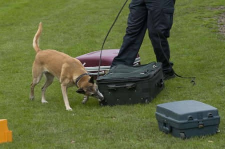 security search: Dog training to search luggage for drugs and bombs