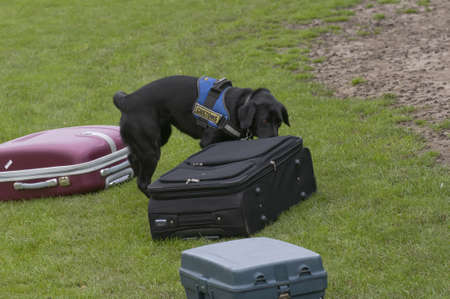 explosive: Dog training to search luggage for drugs and bombs