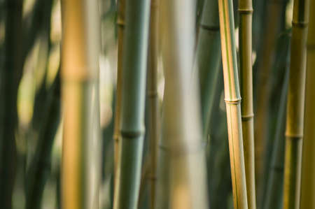 Green and brown Bamboo detail with side sun light