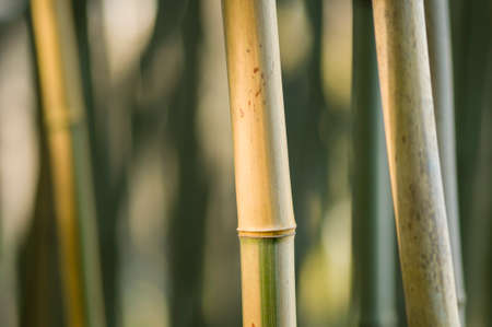 Green and brown Bamboo detail with side sun light Imagens - 41479534