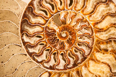 Detail of ammonite fossil shell with mineral cristals inside