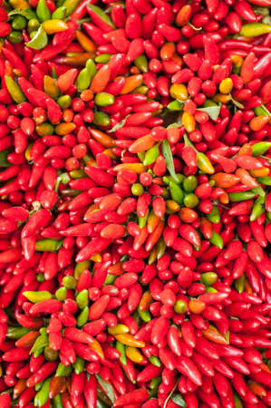 bunch up: close up of red hot pepper bunch on display
