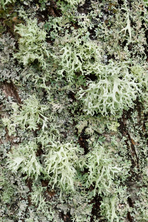 Lichen organisms growing on wood and stone Banco de Imagens