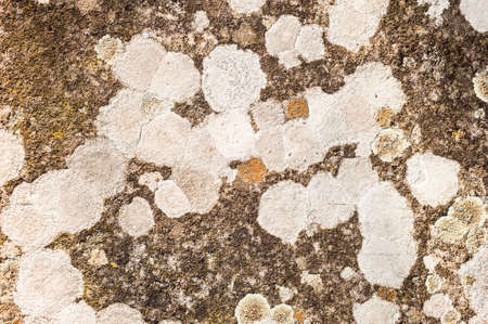 symbiotic: Lichen organisms growing on wood and stone Stock Photo