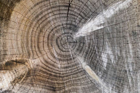 Tree trunk cuts showing growth rings and wood texture. Stock Photo