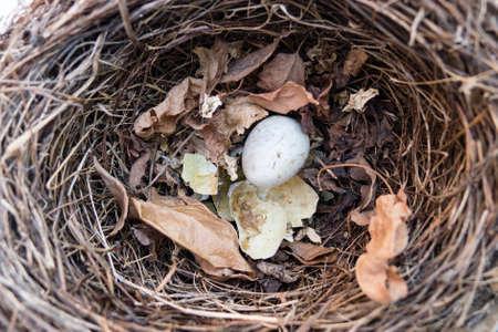 1 つそのまま卵と壊れるもの黒い鳥の巣 写真素材