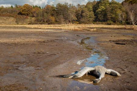 バルカインガス汚染による死んだ一般的なクレーン鳥
