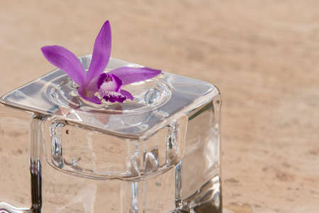 Pink orchid, bletilla striata, on glass cube outdoor, relaxing visual cue.