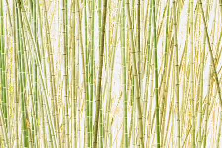 Detail of bamboo forest in high key lighting.