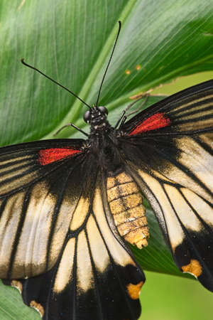 Macro shot of tropical butterfly resting on leaves.
