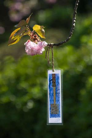 Hanging Japanese poem , haiku, from cherry blossom tree.