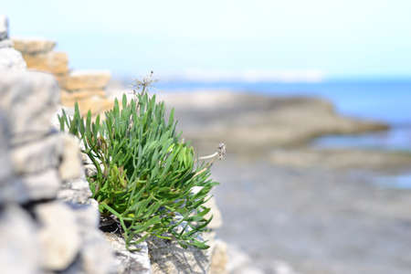 seaboard: Green grass on background of the sea