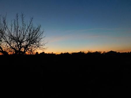 twilight: Twilight with embossed tree