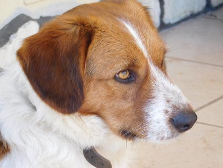 the best: Dog mans best friend
