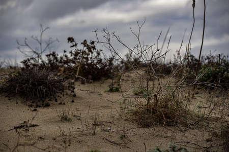 Perspectief Winter Beach Stockfoto - 53379852