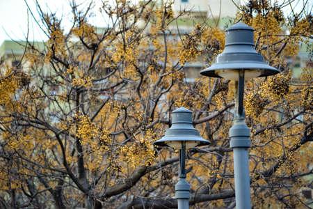 winter street lights Banco de Imagens